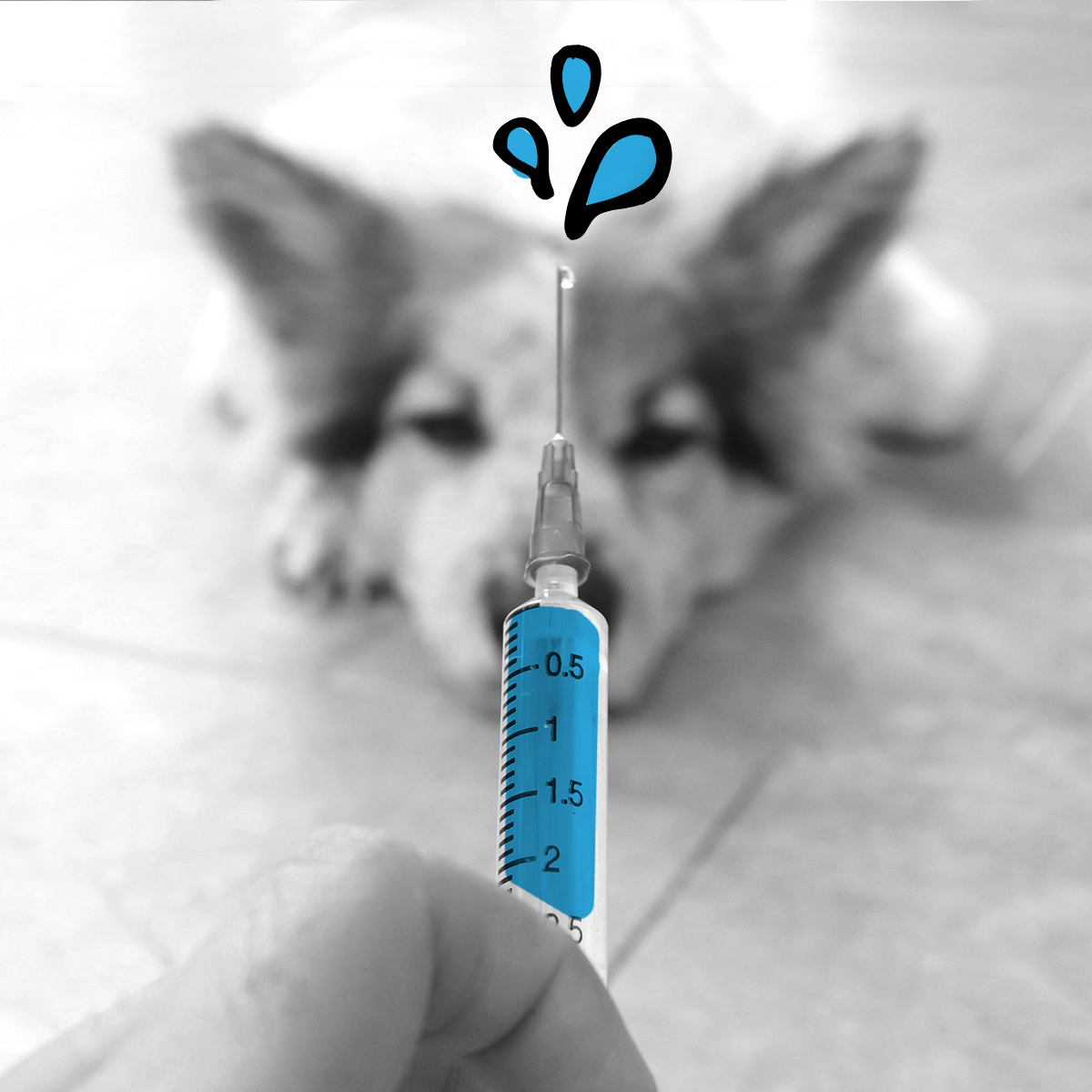 Does Your Dog Need a Flu Shot?