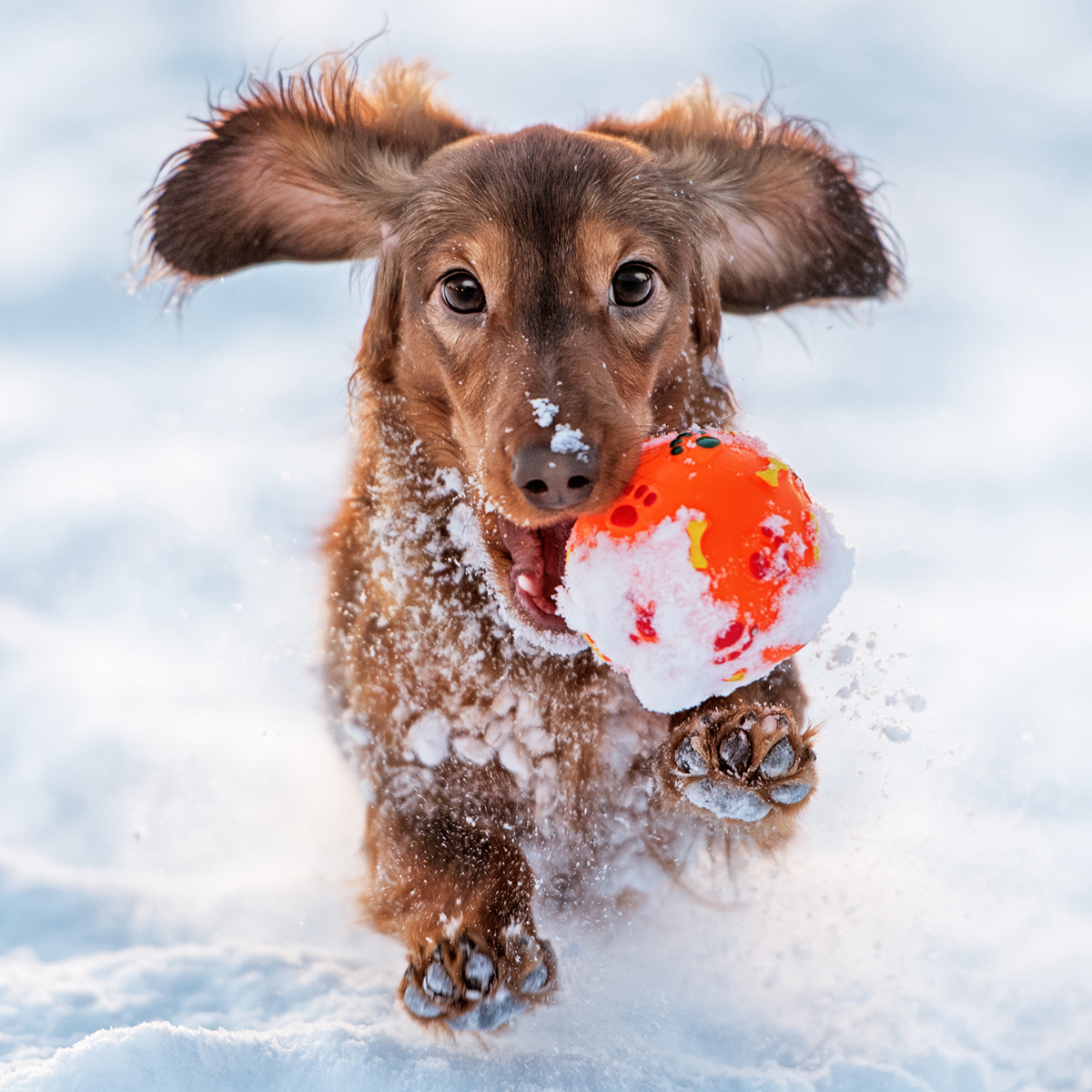 8 Rules for Keeping Pets Safe in the Winter