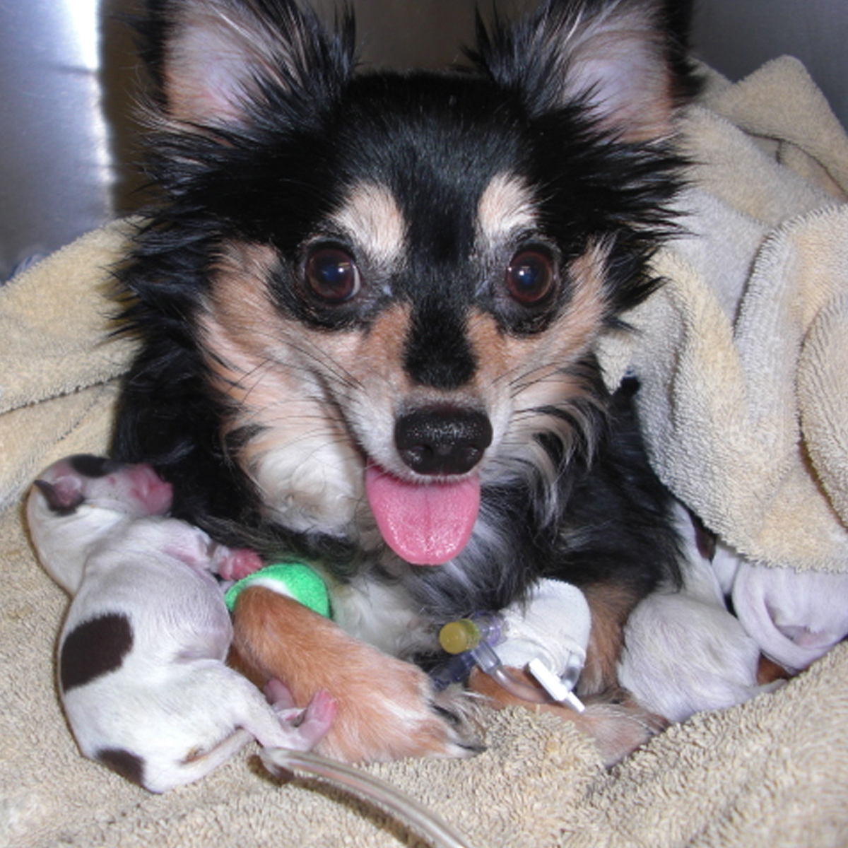 PET STORIES: Dog Birth Risks and Successes