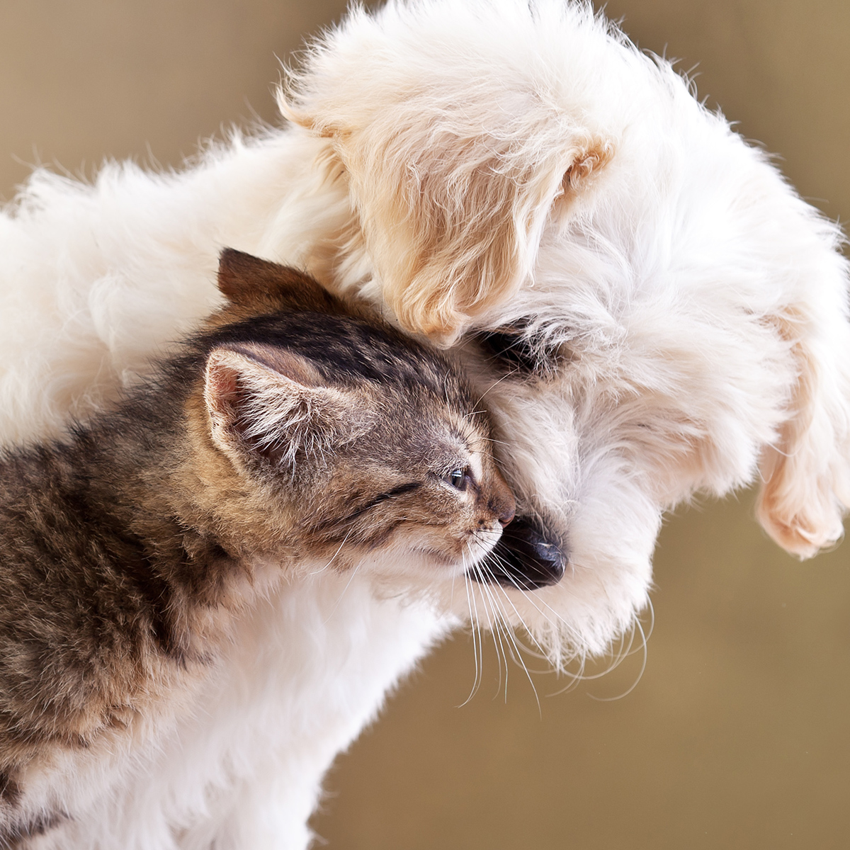 FREE Puppy/Kitten Core Vaccines